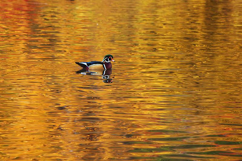 On Golden Pond....