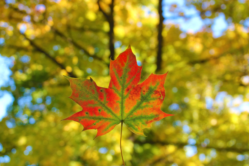 Fall Magic....