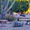 Rock Springs Drive, Phoenix 201709