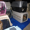Cats we are taking care of during the Harvey Storm. Our count for all the animals is 32.