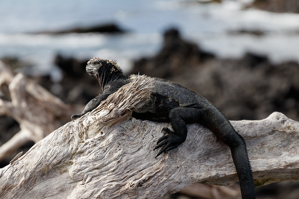 Holiday In Ecuador - Day 5: Isabela Island, Galapagos