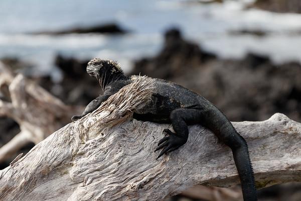Holiday In Ecuador - Day 5: Isabela Island, Galapagos