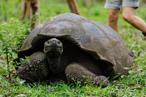 Holiday In Ecuador - Day 7: Santa Cruz Island, Galapagos