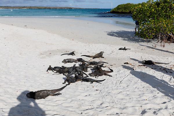 Holiday In Ecuador - Day 8: Santa Cruz Island, Galapagos