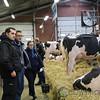 HolsteinVision17-0210