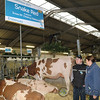 HolsteinVision17-0208