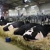 HolsteinVision17-0216