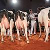 HolsteinVision17-0505