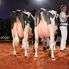 HolsteinVision17-0506