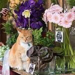 Cat shopping for flowers.