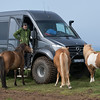 Some curious Icelandic horses checking our our vehicle. A lot of people also stared and took pictures of it.