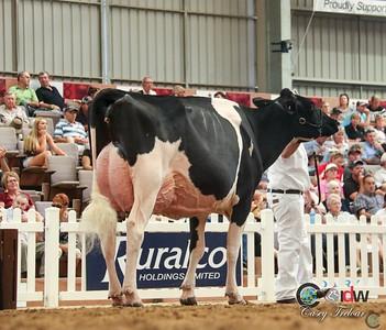 IDW Holstein Senior Cow Show 2017