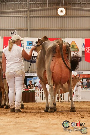 IDW Jersey Senior Cows 2017