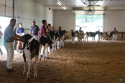 Iowa State Holstein Show 2017