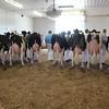 IA_State_Holstein17_IMG_9477