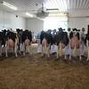IA_State_Holstein17_IMG_9476
