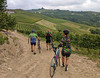 Walking bikes in the vineyards