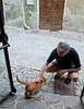 Robert petting a cat in Monforte D'Alba