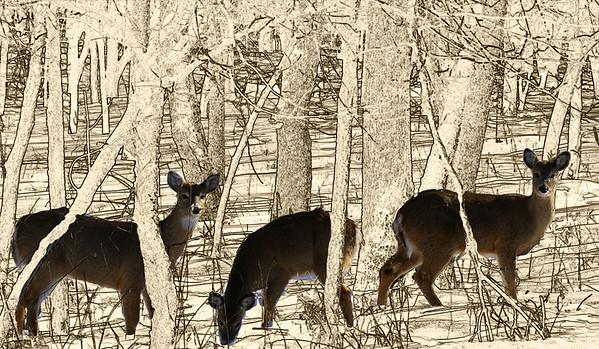 09,DA014,DC,Deer drawing