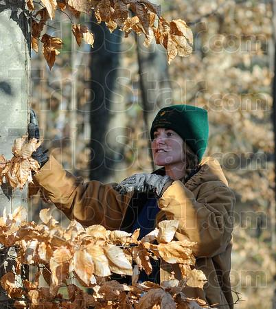 MET 010117 AMBER TREE