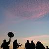 Starling murmuration captured by BBC Winterwatch