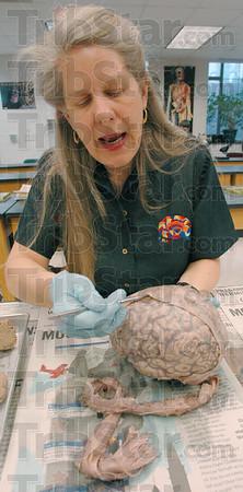 MET032706taylor cortex