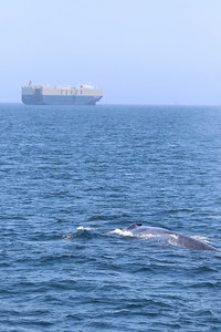 Of Whales and Ships