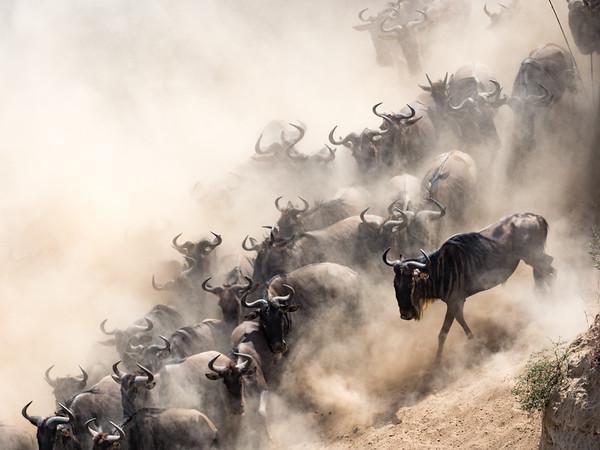 July - Masai Mara
