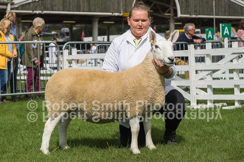 Overall Champion Shearling Gimmer