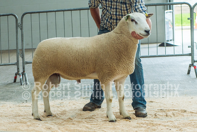Lot 95 from HM Dugdale and Son sold for 9,000 gns