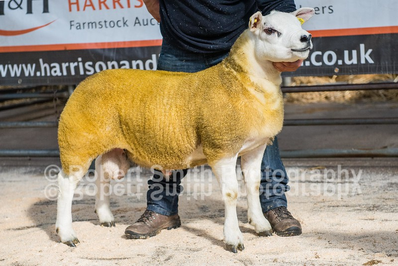 Lot 141 Ram Lamb sold for 3000 gns