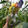 MET 072117 Josh Speer Corn