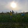 MET 072117 Corn Volunteers
