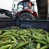 MET 072117 Corn Truck