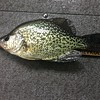 FOOT-LONG CRAPPIE DID NOT WIN EITHER....