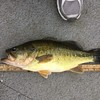 DOUG'S BASS...JUST A BIT OVER 18""
