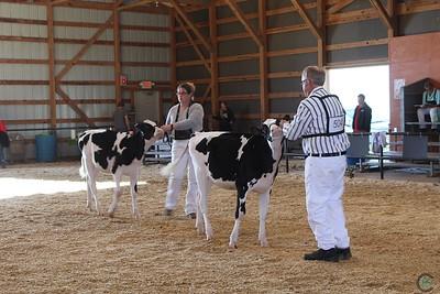 MN State Holstein Show 2017