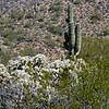 Usury Mountain Park, Mesa AZ 47