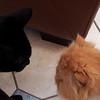Eine der ersten Begegnungen zwischen Marley und Andokai. Eigentlich lebt Marley zwei Haeuser weiter, kommt da aber mit dem Hund nicht klar und wir sind somit Zweitbleibe. Katzendominanzgerangel konnte also nicht ausbleiben.