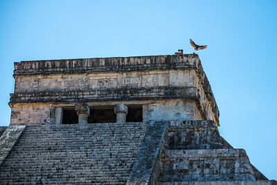 Vulture landing on top of the main pyramid.