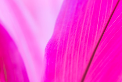 Messing with color.  The leaves on this plant had cool color.