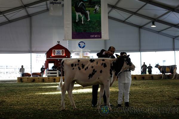 Mexico2017_Holstein-2229