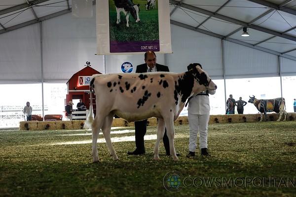 Mexico2017_Holstein-2230