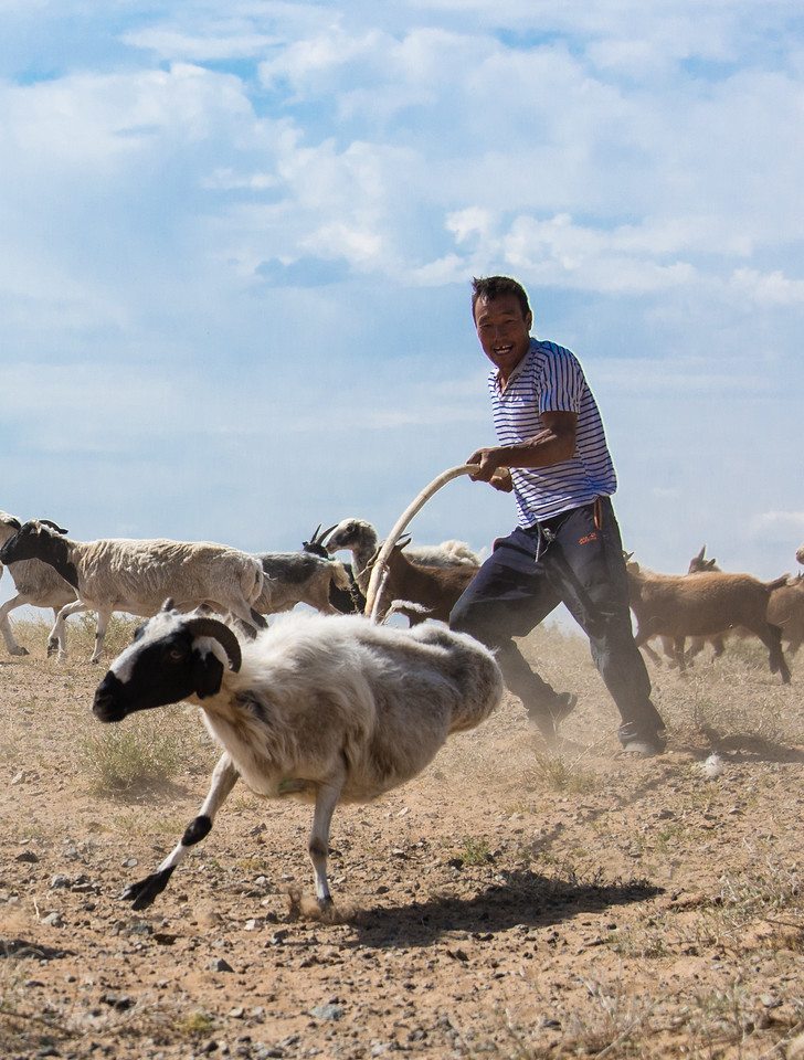 Great shot that Paula got.  We were driving to an archeological site and happened upon a family shearing their sheep.  The pole has a rope loop on the end for lassoing the target animals.