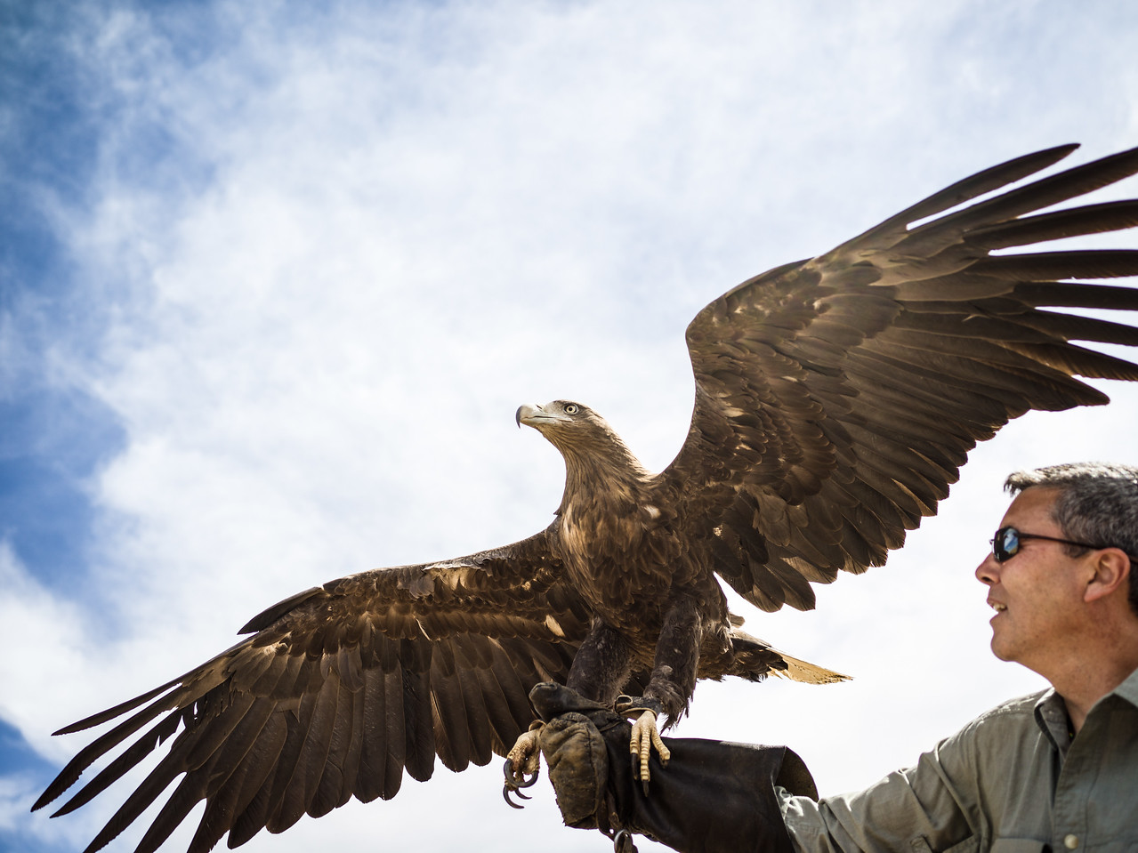 White-tailed eagle picture by Christopher Michel