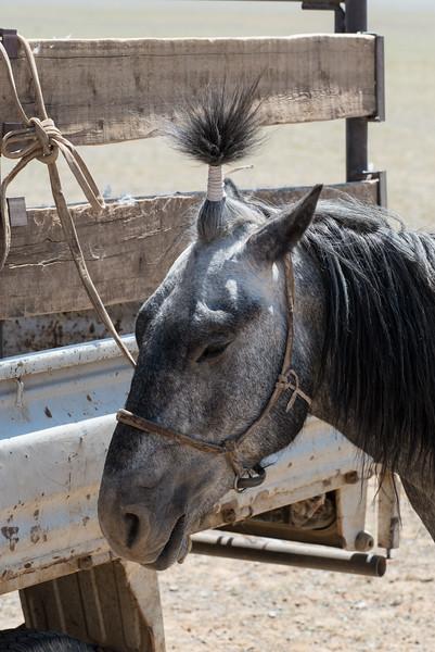 Zippy the pin horse