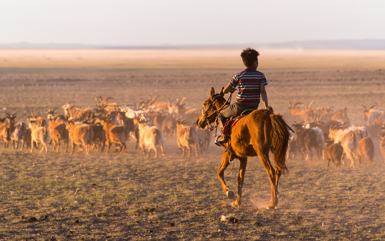 Boy (with his family) bringing goats to the Three Camels watering trough.