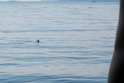 Hey seal friend!