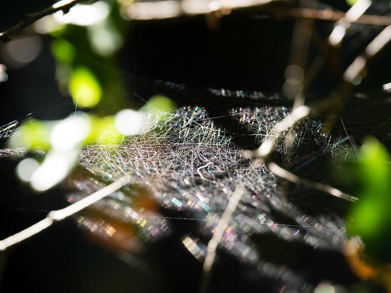 Spider-home