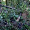Landslide near the Kent Trail